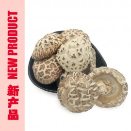 LU SHAN YUAN MU WHITE FLOWER MUSHROOM (5 - 6CM)